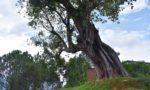チョウタリの木。村の休憩所です。