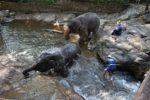 象たちが水浴びをする様子