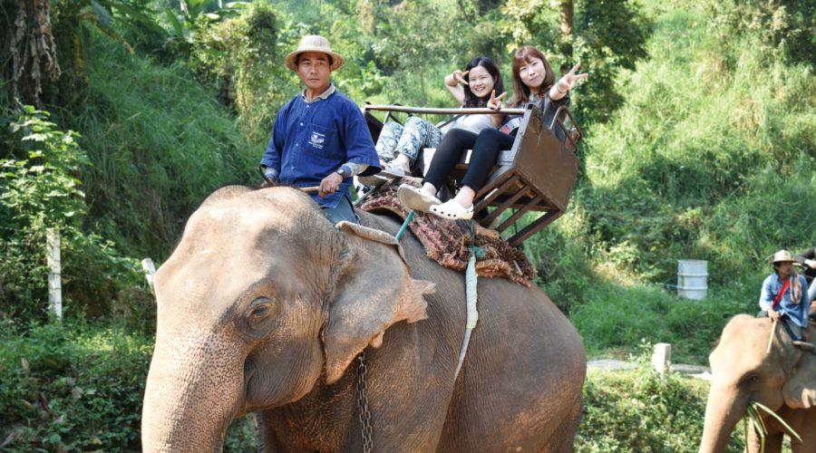 エレファントキャンプで象乗り体験